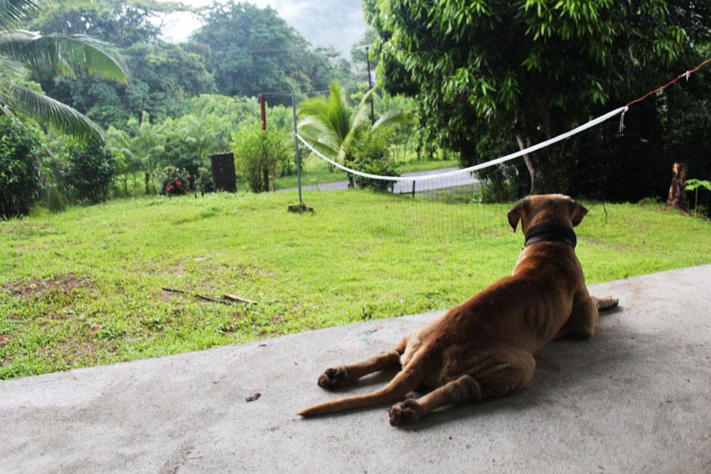 hund-nyder-junglen