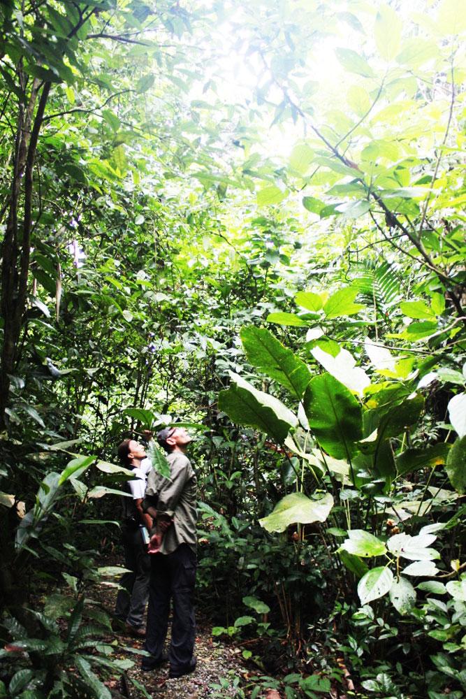 junglevandring