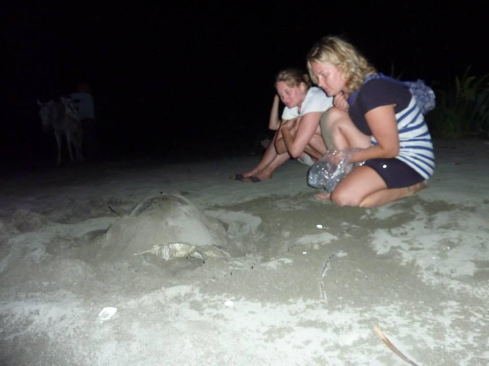 panama-skildpadde-nat