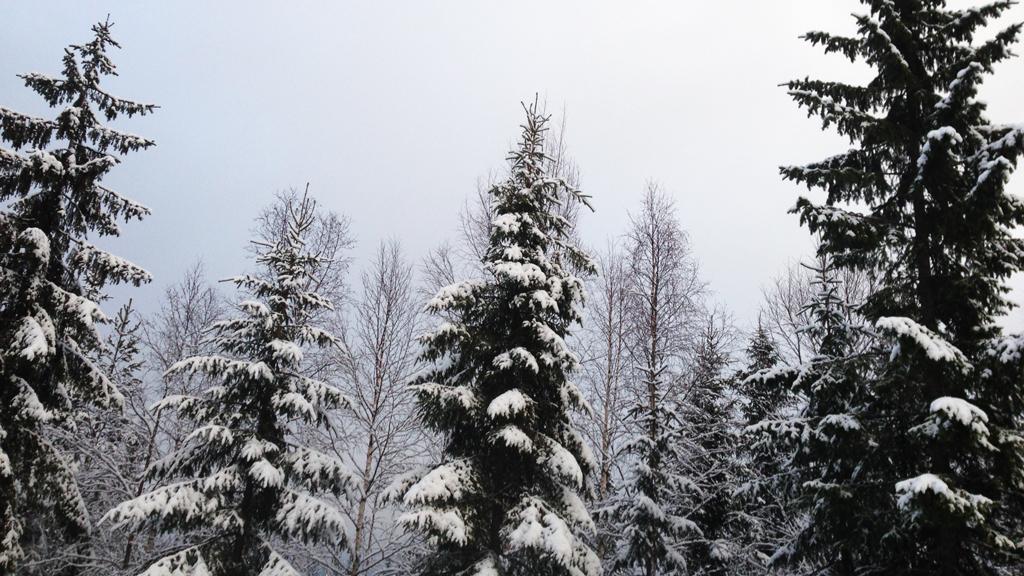 sne-træer