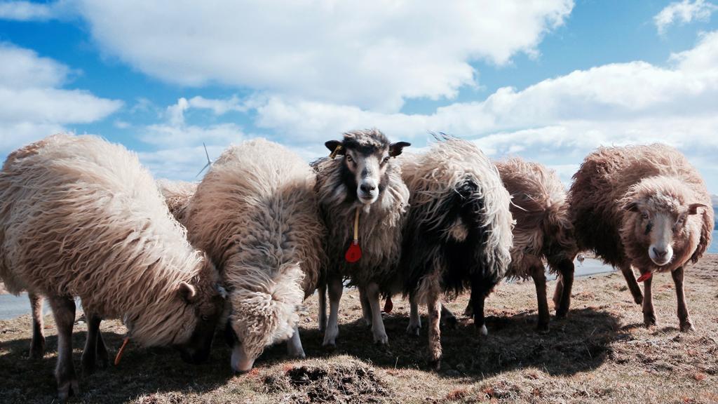 Outnabout-færøerne-klaksvik