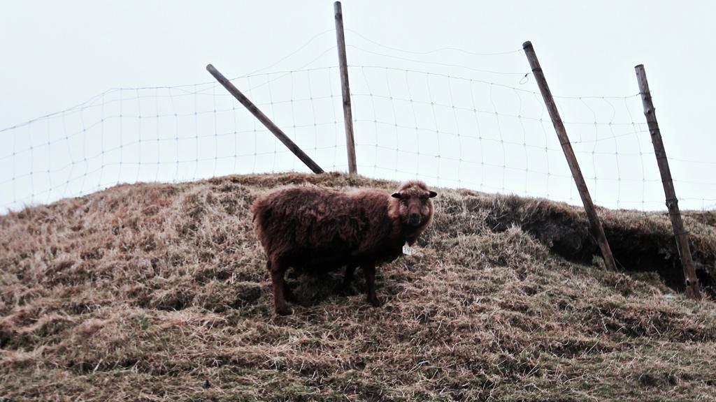 færøerne-gjogv-outnabout4