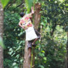 Junglevandring, eco-turisme og lokale råvarer fra egen plantage | Rainforest retreat